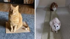Когда нужно выбрать уютное место, у котов появляется своя особая логика