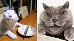 Милые и забавные котики