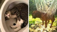 Неуклюжие коты и собаки - мастера неловких ситуаций