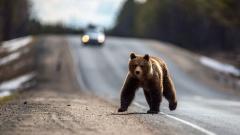 Медведь напал на людей в окрестностях Магадана