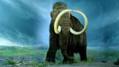 Названа главная причина вымирания мамонтов — древние люди ни при чем